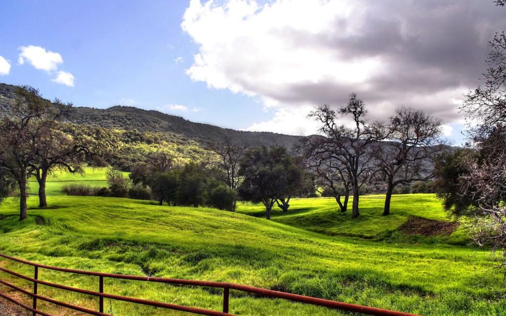 Grassland-Landscape-Wallpaper