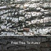 Free Tree Textures